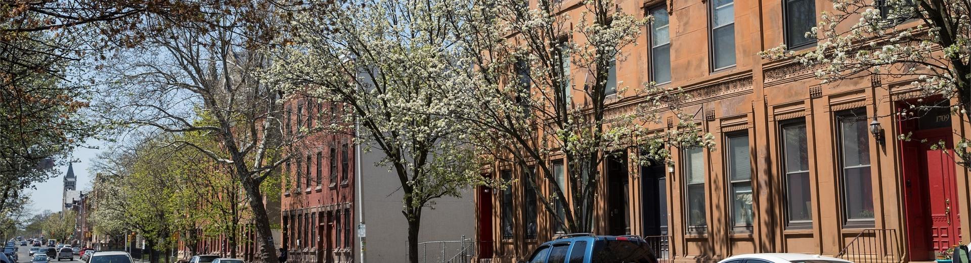 North philly neighborhood street with flowering trees
